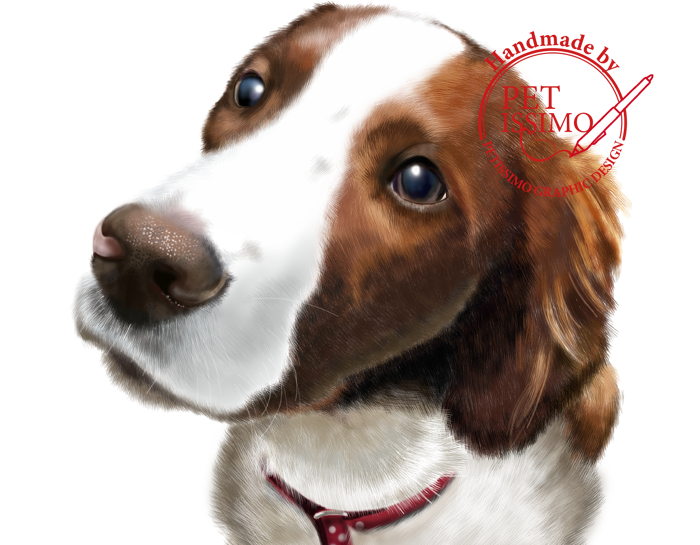Irish red & white setter