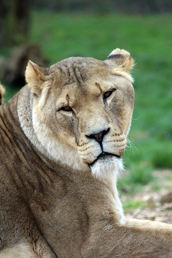 Whipsnade-Zoo 2016